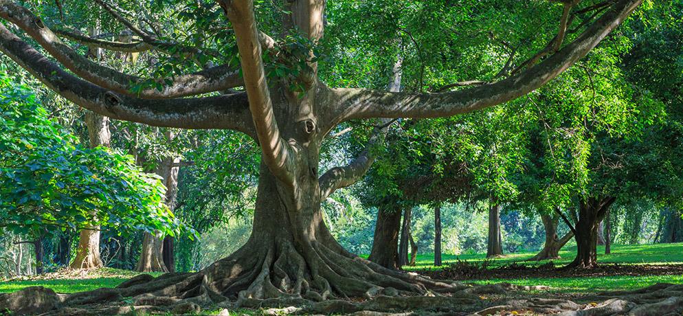 Image Pourquoi les arbres